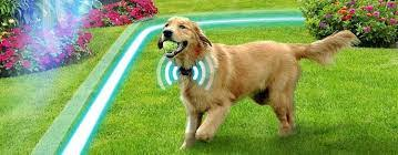 Innotek Dog Fence Vs Transfer Wireless Dog Fence Reviews 2020