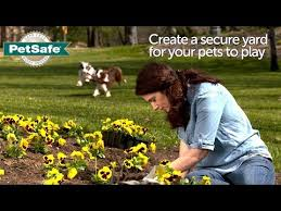 Petsafe Basic In Ground Fence Youtube