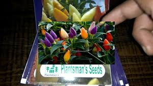summer flower seed in india you