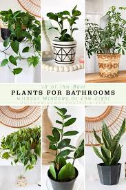 best plants for bathrooms delineate