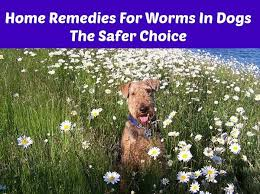 home remes for worms in dogs the