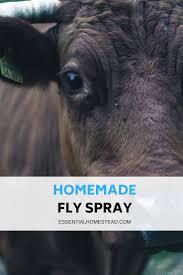 homemade fly spray recipe essential