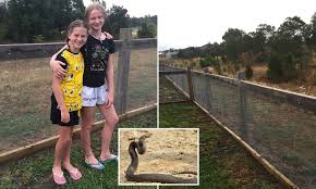 Botanic Ridge Residents Build Snake Proof Fence Around Their Homes Daily Mail Online