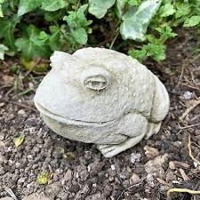 baby bullfrog stone outdoor garden lawn