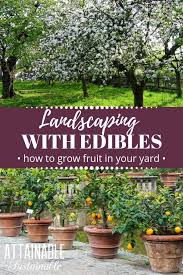 fruit trees for an urban orchard