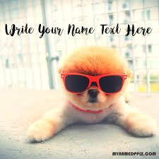 Write Name Profile Cute Dog Image Status Name Edit Pictures | My Name Pix  Cards