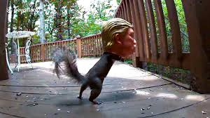 Squirrel Gets Head Stuck In Donald Trump Feeder Video Dailymotion