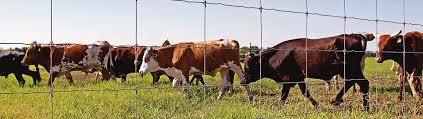 Cattle Fence Panels High Tensile Cattle Wire Fence By Stay Tuff