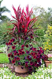 11 easy colorful container garden ideas