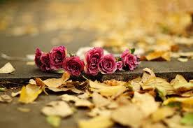 fall flowers wallpaper elegant autumn