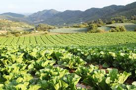 Image result for Asian farm""