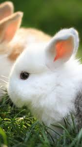 cute rabbits wallpaper 43836
