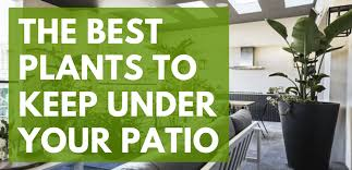 plants to keep under your patio