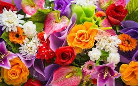 ايمجكس صور ورد اجمل واروع صور الورود في العالم الورد الطبيعيه