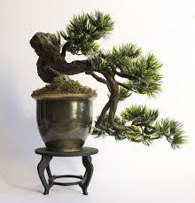 bonsai tree styles bonsai tree gardener