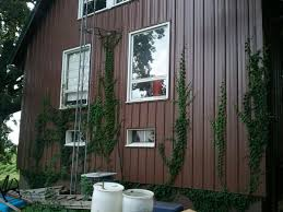 Does Boston Ivy Cling To Metal Ubc Botanical Garden Forums
