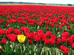اجمل صورة الورود النادرة زهور رائعه تراها لاول مره في حياتك