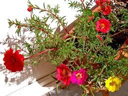 تعرف على زهرة صباح الخير بوكيه اكسبريس Bouquet Express