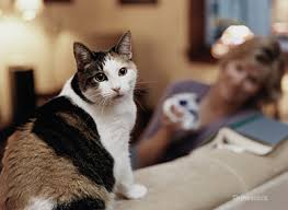 kidney disease in cats what cat owners