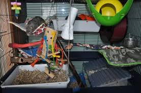 top 15 best rat toys reviews guide