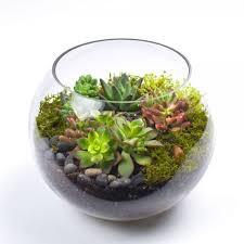 sputnik diy succulent terrarium kit