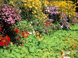 giverny claude monet s garden in autumn