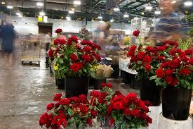 market focus sydney flower market