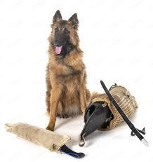 belgian shepherd tervueren photo by ...