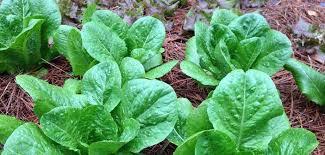 vegetables now in northwest florida