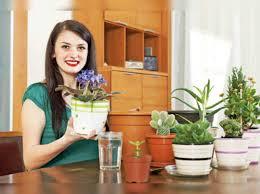 here s how to do indoor gardening