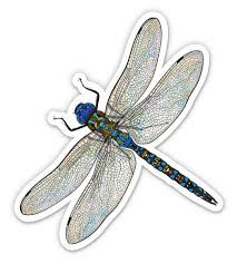 Dragonfly Realistic Pretty Insect 3 Vinyl Sticker For Car Laptop I Pad Phone Helmet Hard Hat Waterproof Decal Walmart Com Walmart Com
