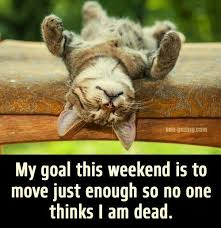 Good to have goals~ Have a great weekend! - All Saints Animal Hospital |  Facebook
