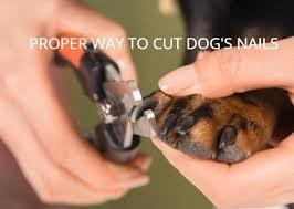 proper way to cut dog s nails safe