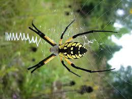 spiders all gone services dallas