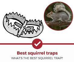 top 5 best squirrel traps 2020