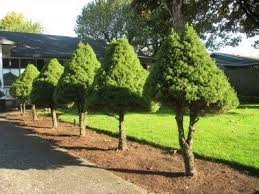 good trees for the landscape