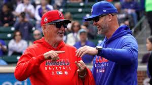 New Angels manager Joe Maddon reunites with Cubs at spring training