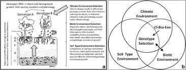 plant genetic effects on soils under