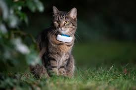 The 25 Best Gps Trackers And Collars Of 2020 Cat Life Today