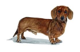 Wiener Dog Small Breed Dachshund Vinyl Decal Sticker Car Home Truck Suv Boat Rv Ebay