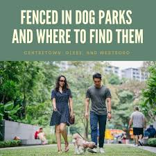 Fenced In Dog Parks And Where To Find Them In Ottawa Matt Richling Ottawa Condos And Lofts Ottawa Real Estate For Sale