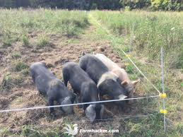 The 5 Best Electric Fence Wires In 2020 Farmhacker Com