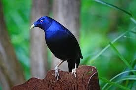 free birds images free stock photos