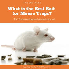 mouse trap baits to catch mice
