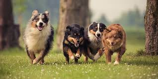 If multiple dogs have the same name, they will all come running when you call out their name!