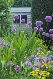 how to plant a border like a pro the