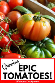 epic tomatoes book review how to
