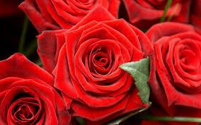 خلفيات ويندوز مناظر طبيعية زهور وورود جميلة عالية الجودة Hd