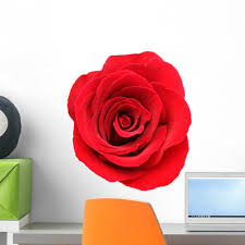 Red Rose White Wall Decal Wallmonkeys Com