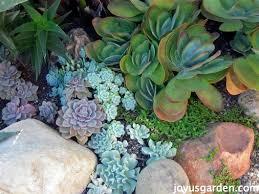 prep the soil for a succulent garden
